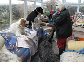 Bracken's Dog Rescue