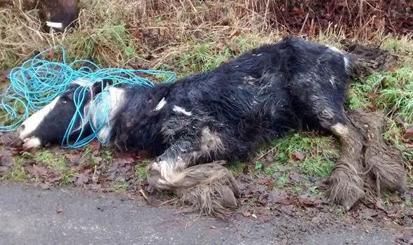 Horse dumped by roadside