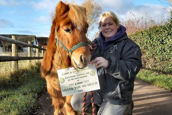Larry the Shetland Pony