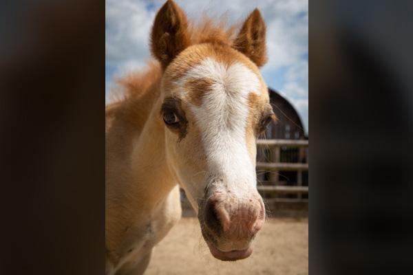 Nala the foal