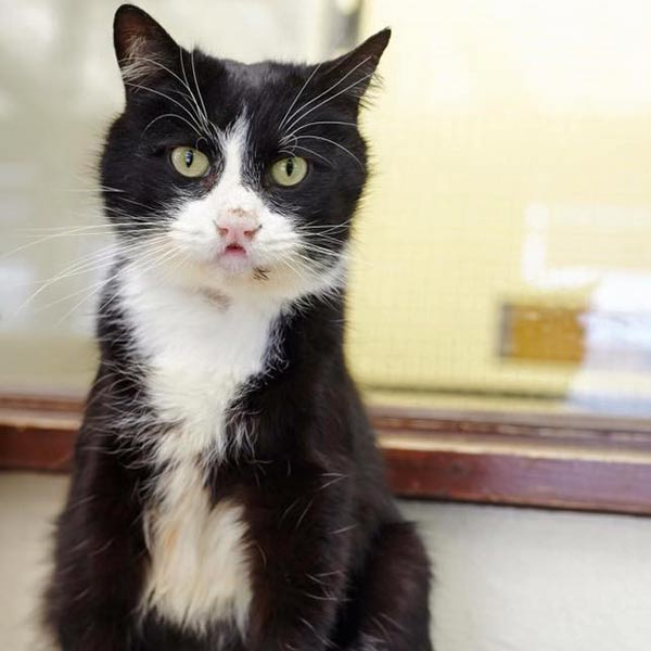 Pepper the cat - recovered
