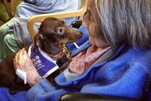 Pops the Sausage Dog meeting OAP's