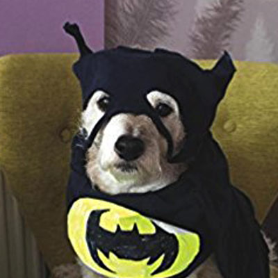Rupert the Dog in Batman fancy dress