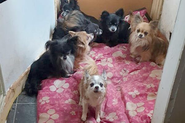 Group of dogs in poor conditions